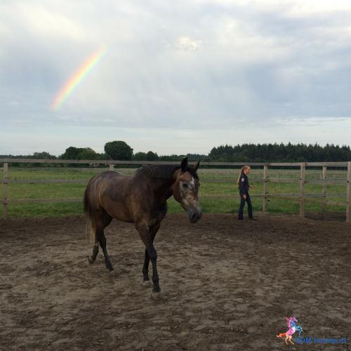 7.paarden coach gelderland 5x5