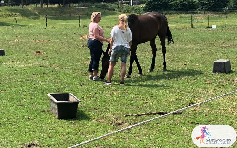 17.Jeanet Bathoorn Paardencoaching Nijmegen