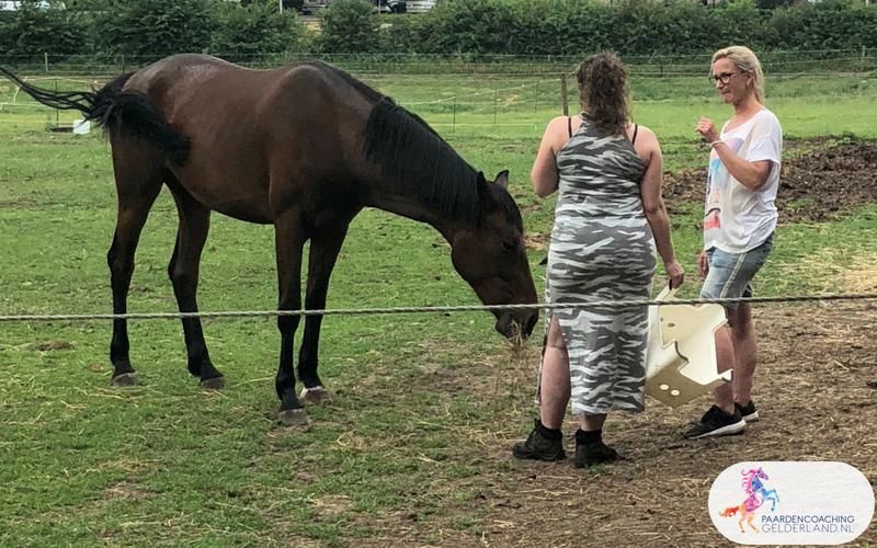 25.Jeanet Bathoorn Paardencoaching Nijmegen