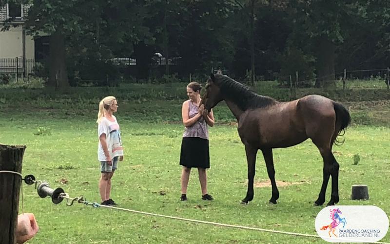 28.Jeanet Bathoorn Paardencoaching Nijmegen