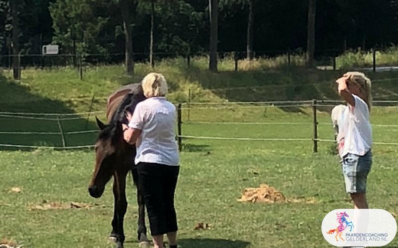 3.Jeanet Bathoorn Paardencoaching Nijmegen