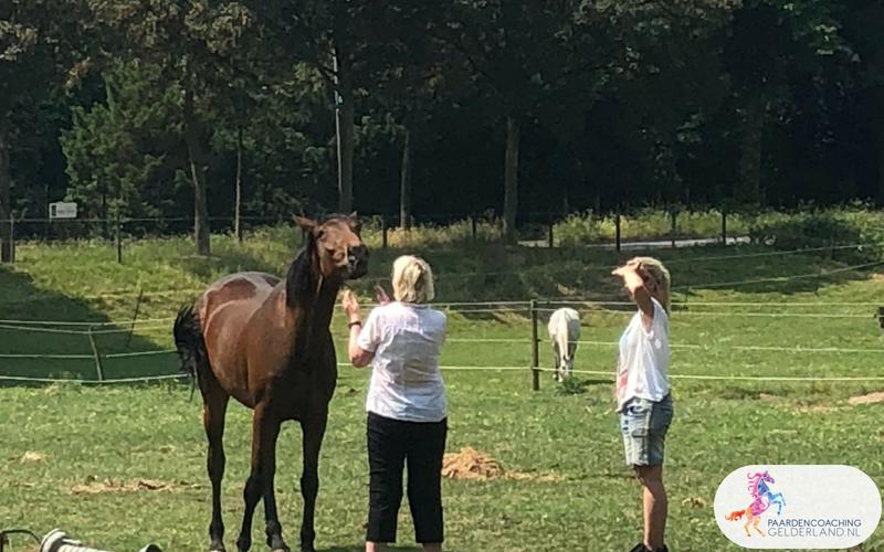 5.Jeanet Bathoorn Paardencoaching Nijmegen