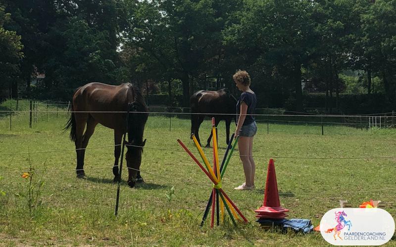 7.Jeanet Bathoorn Paardencoaching Nijmegen