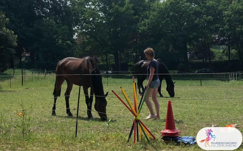 8.Jeanet Bathoorn Paardencoaching Nijmegen