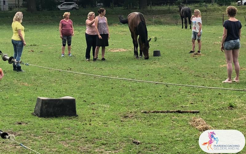 Paardencoaching34.Jeanet Bathoorn Paardencoaching Nederland Nijmegen