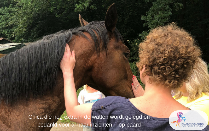 Paardencoaching40.Jeanet Bathoorn Paardencoaching Nederland Nijmegen