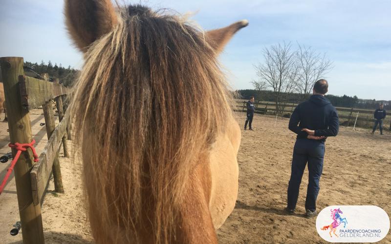 12.Leiderschapstraining paarden teamtripper JCI Ede Laag Soeren april 2018