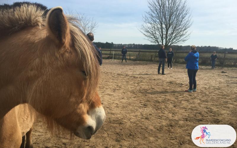 13.Leiderschapstraining paarden teamtripper JCI Ede Laag Soeren april 2018