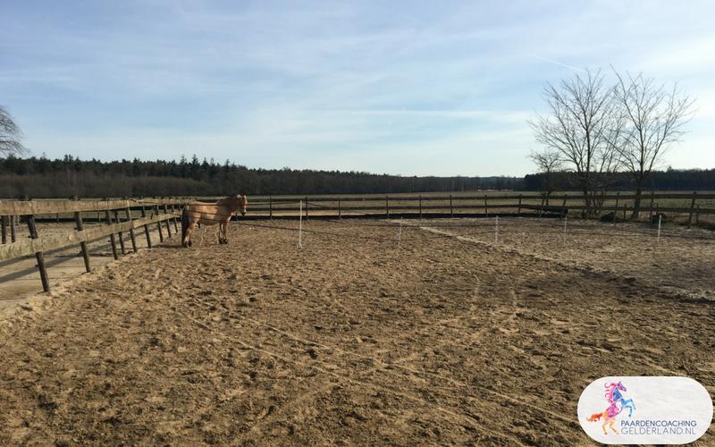 5.Leiderschapstraining paarden teamtripper JCI Ede Laag Soeren april 2018