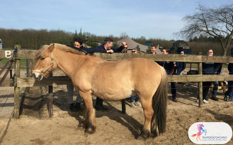 6.Leiderschapstraining paarden teamtripper JCI Ede Laag Soeren april 2018