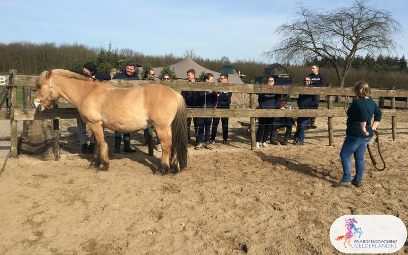 7.Leiderschapstraining paarden teamtripper JCI Ede Laag Soeren april 2018