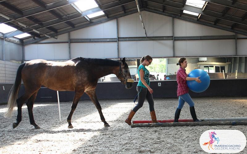 25.Paardencoaching Gelderland Lentefair Bennekom