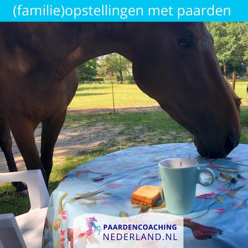 1.familieopstellingen-paarden-gelderland-nederland-5x5