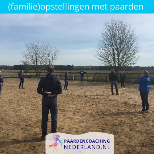 3.-familieopstellingen-paarden-gelderland-nederland-5x5