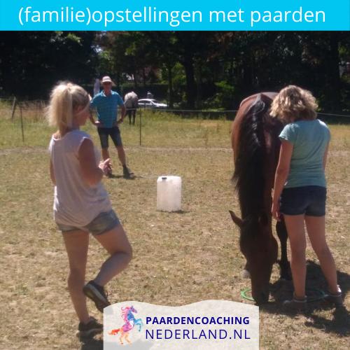4.-familieopstellingen-paarden-gelderland-nederland-5x5
