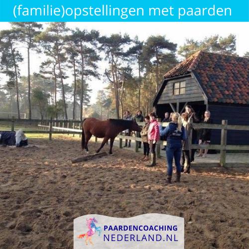 6.familieopstellingen-paarden-gelderland-nederland-5x5