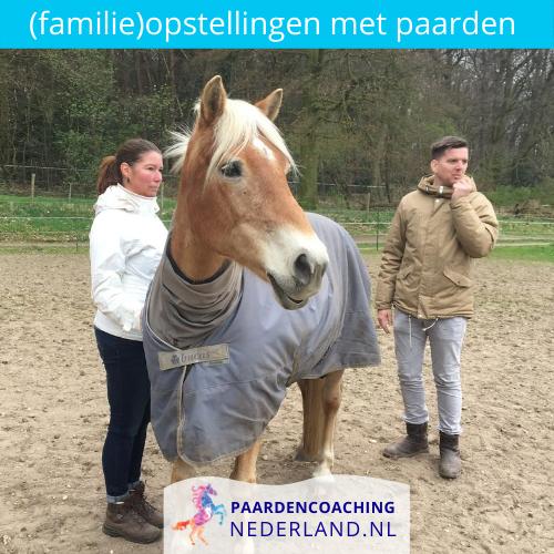 7.familieopstellingen-paarden-gelderland-nederland-5x5