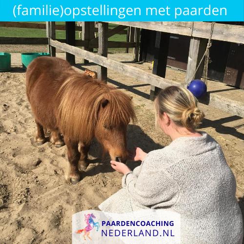 8.familieopstellingen-paarden-gelderland-nederland-5x5