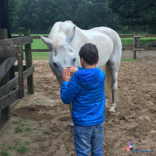 1.paardenkracht voor pubers gelderland