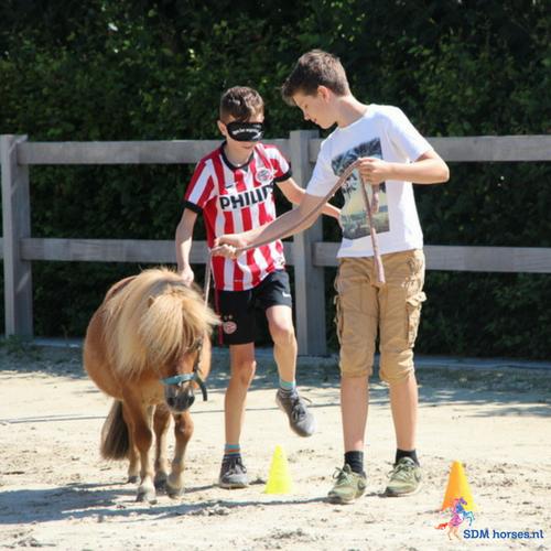 5.paardenkracht voor pubers gelderland