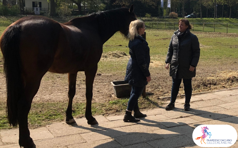 10.workshop-HSP-paardencoaching-nijmegen-2019.workshop-HSP-paardencoaching-nijmegen-2019