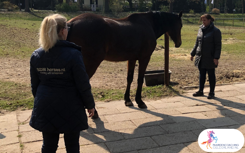 11.workshop-HSP-paardencoaching-nijmegen-2019.workshop-HSP-paardencoaching-nijmegen-2019