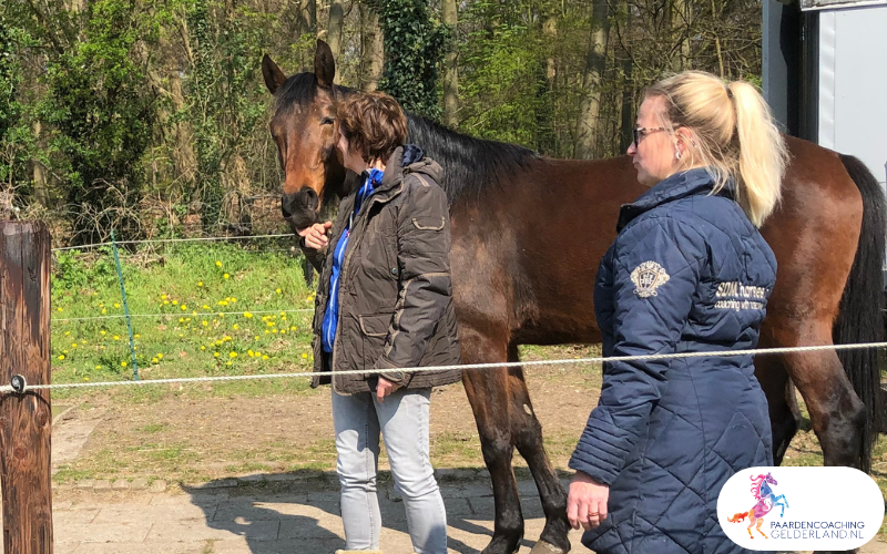 16.workshop-HSP-paardencoaching-nijmegen-2019.workshop-HSP-paardencoaching-nijmegen-2019