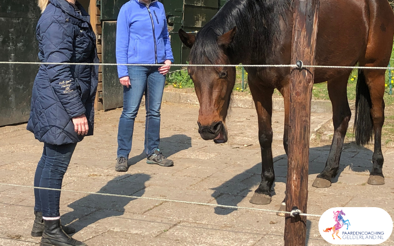 17.workshop-HSP-paardencoaching-nijmegen-2019.workshop-HSP-paardencoaching-nijmegen-2019