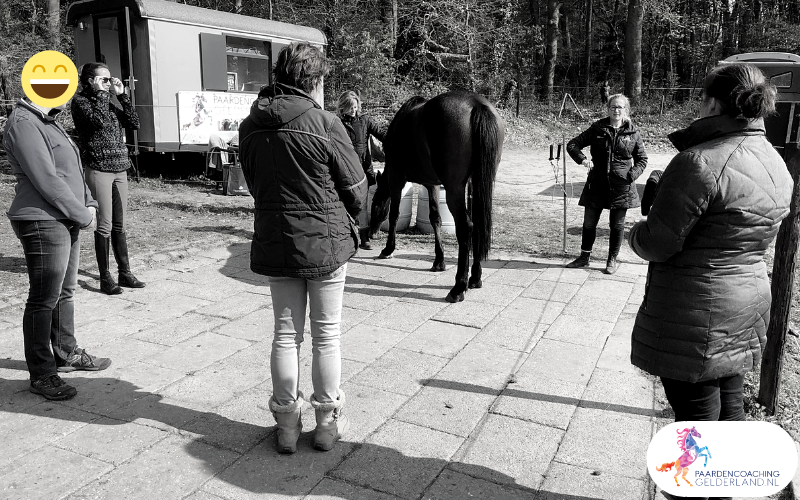 19.workshop-HSP-paardencoaching-nijmegen-2019.workshop-HSP-paardencoaching-nijmegen-2019