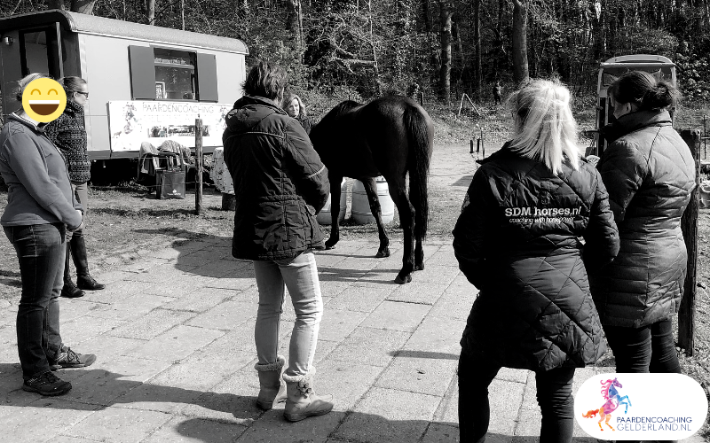 20.workshop-HSP-paardencoaching-nijmegen-2019.workshop-HSP-paardencoaching-nijmegen-2019
