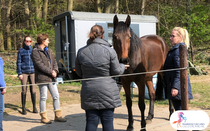 21.workshop-HSP-paardencoaching-nijmegen-2019.workshop-HSP-paardencoaching-nijmegen-2019