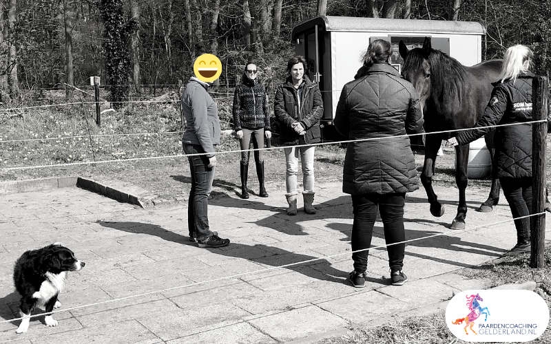 23.workshop-HSP-paardencoaching-nijmegen-2019.workshop-HSP-paardencoaching-nijmegen-2019
