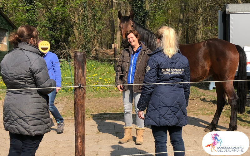 9.workshop-hsp.workshop-HSP-paardencoaching-nijmegen-2019.workshop-HSP-paardencoaching-nijmegen-2019