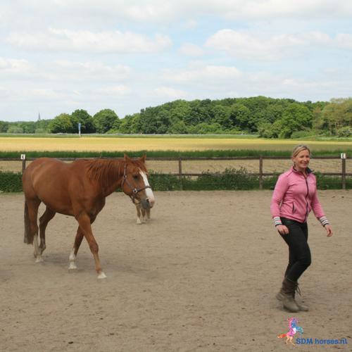 Intuitief grondwerk met paarden