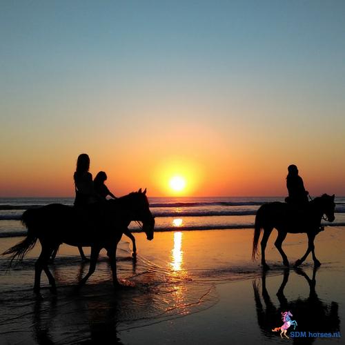 Relaxed paardrijden? Boek nu een ruitercoaching