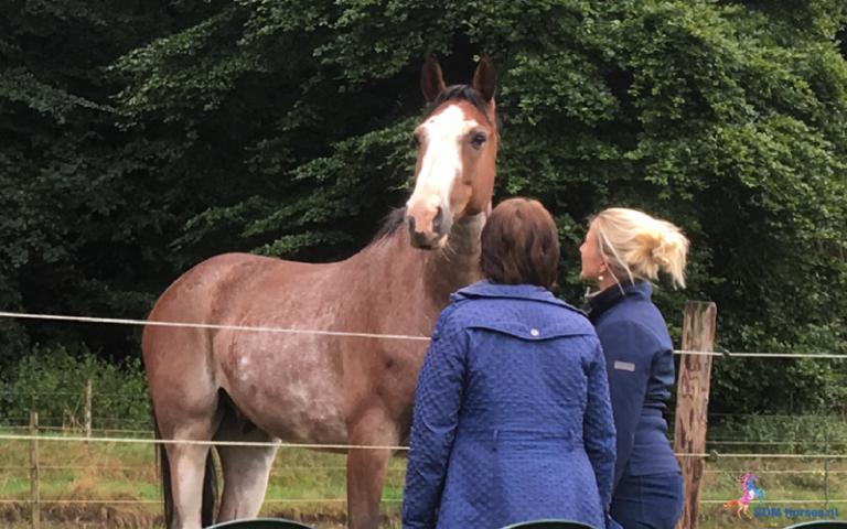 18.paarden coach gelderland 8x6 2