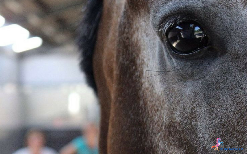 25.paarden coach gelderland 8x6