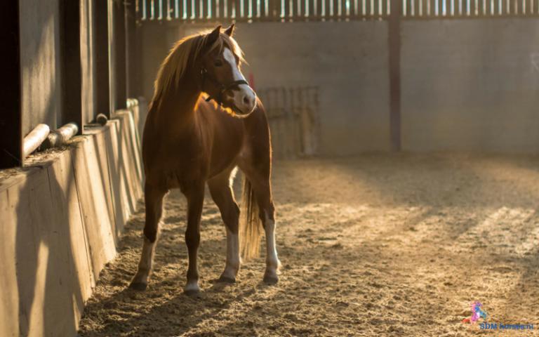 29.paarden coach gelderland 8x6