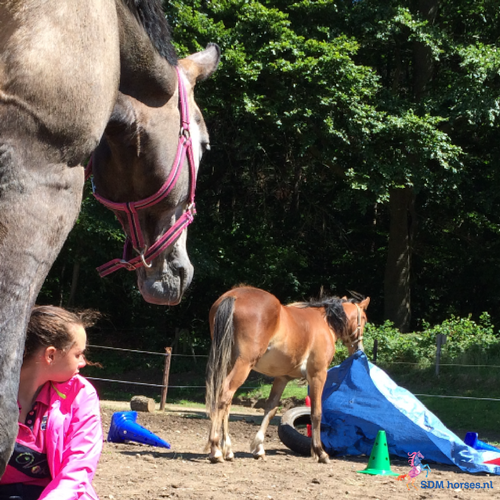 Individuele paardencoaching