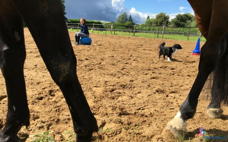 3.paarden coach gelderland 8x6