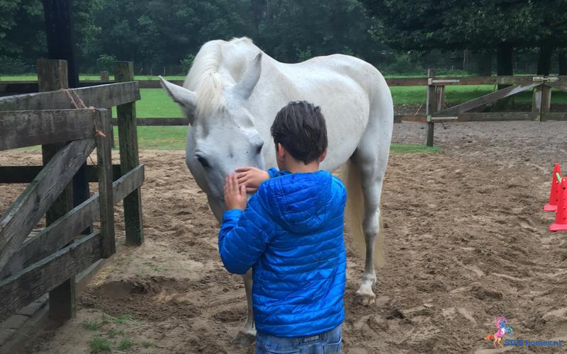30.paarden coach gelderland 8x6