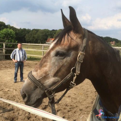 4.paarden coach gelderland 5x5