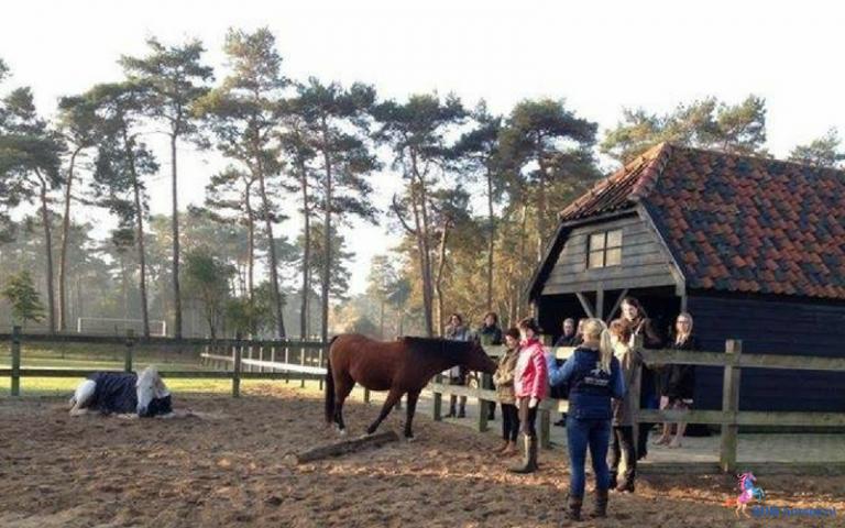 7.paarden coach gelderland 8x6 2