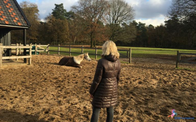 8.paarden coach gelderland 8x6 2