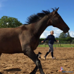 Waarom paardencoaching?
