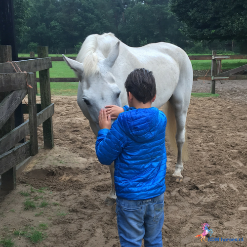 Cursus Paardenkracht voor Pubers