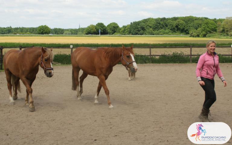 12.Paardencoaching Gelderland Ruitercoaching