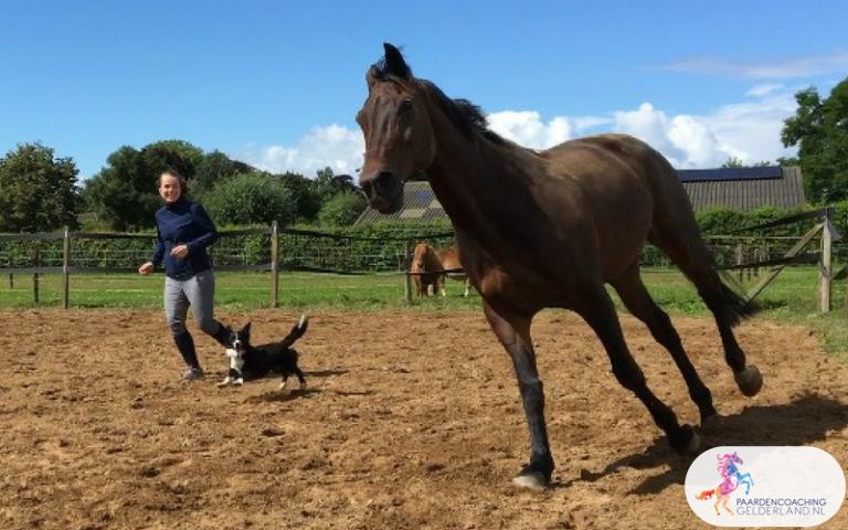 23.Paardencoaching Gelderland Ruitercoaching