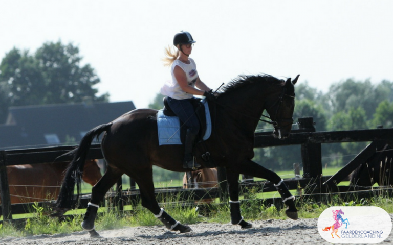 4.Paardencoaching Gelderland Ruitercoaching