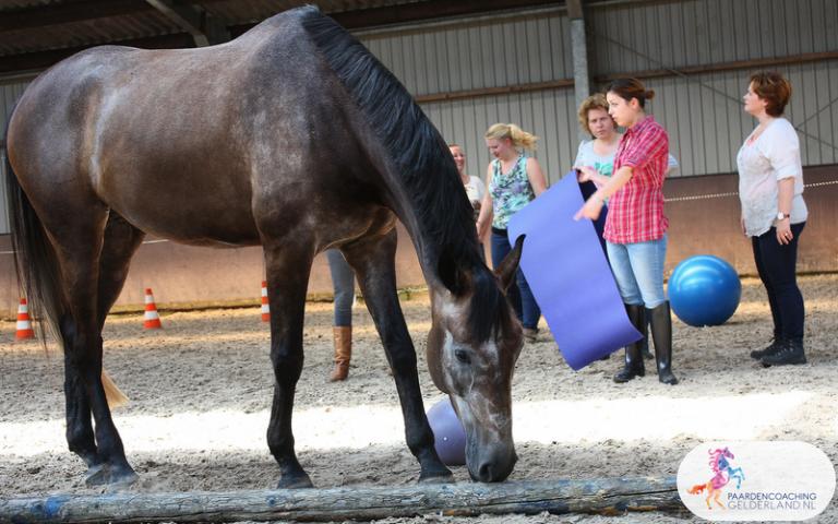 5.Paardencoaching Gelderland Ede Arnhem Nijmegen Apeldoorn
